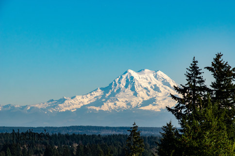 Mount Rainier from Lookout Park With WM.