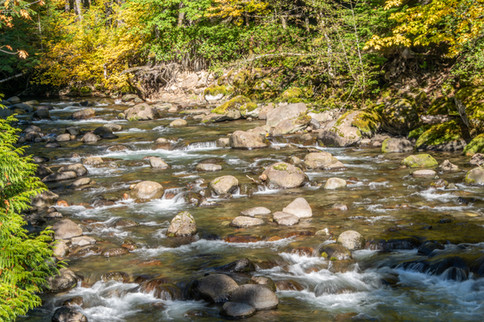 North Fork Cispus River no WM_.jpg