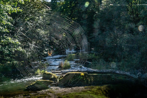 Spider Web at Tumwater Falls Park Middle