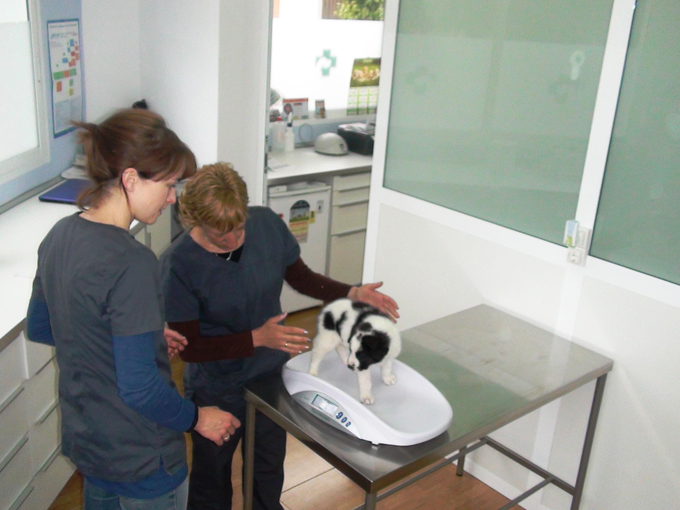 Veterinario en hondon de las Nieves