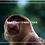 Thumbnail: Bako National Park
