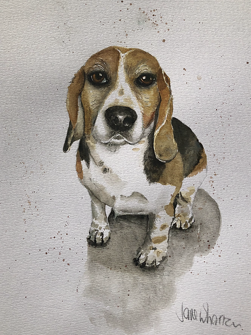 Dog paintings watercolour Beagle Labrador commissions