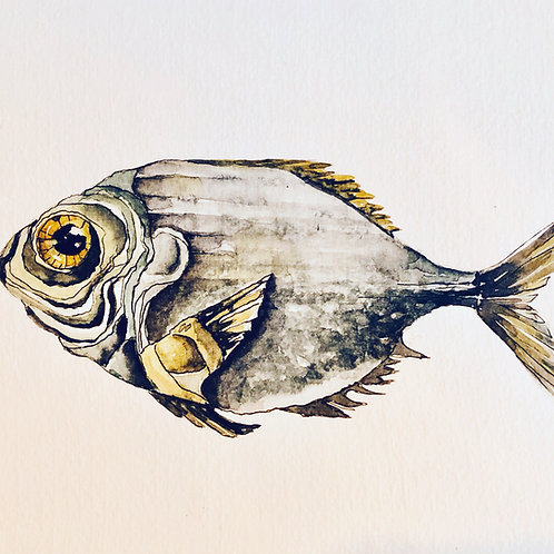 watercolour fish John Dory original print for sale