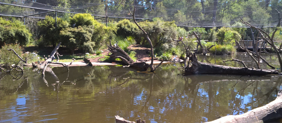 Australia, Wildlife and Me