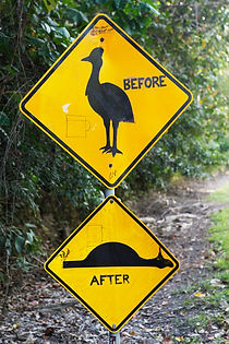 Casoar, Cassowary, Australie, Queensland, Rainforest, Daintree, National Park, Cape tribulation, panneau australien, take care, before, after