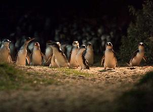 pengouins