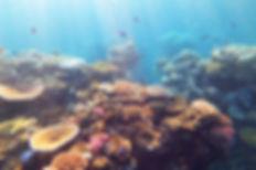 Flynn reef great barrier reef, maxime coquard