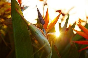 oiseaux du paradis