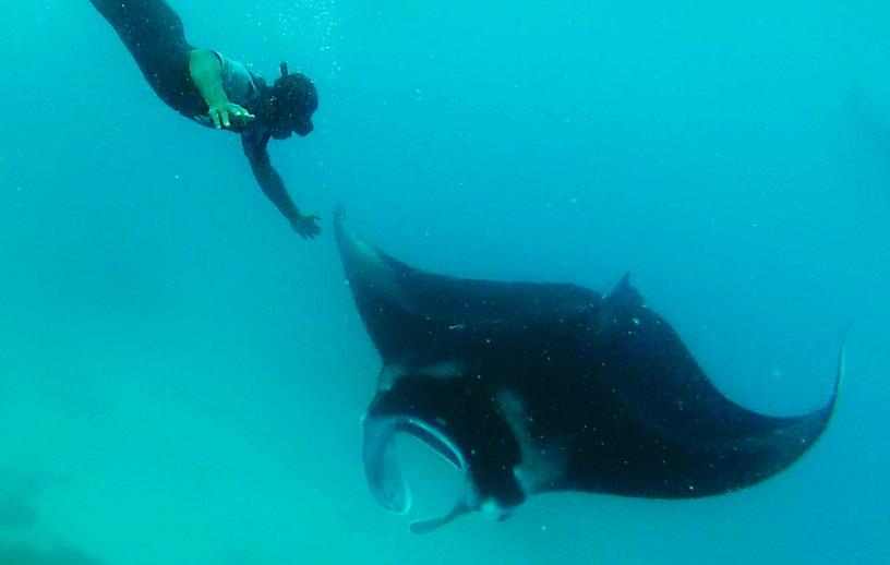 manta ray fiji