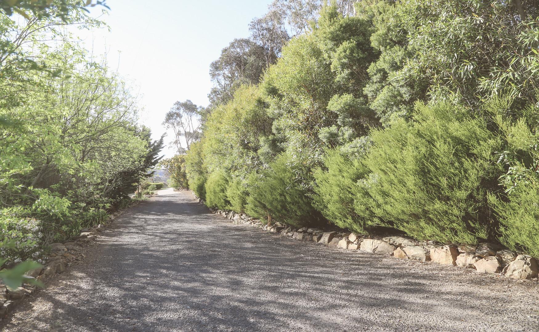 Landscape_Day_Pathways_2019_IMG_3089.jpg