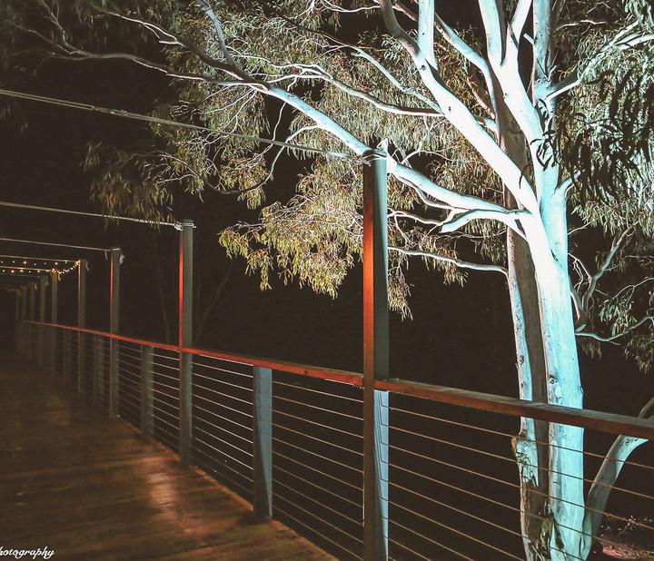 The Wedgetail Pavilion_Interior_Night_De