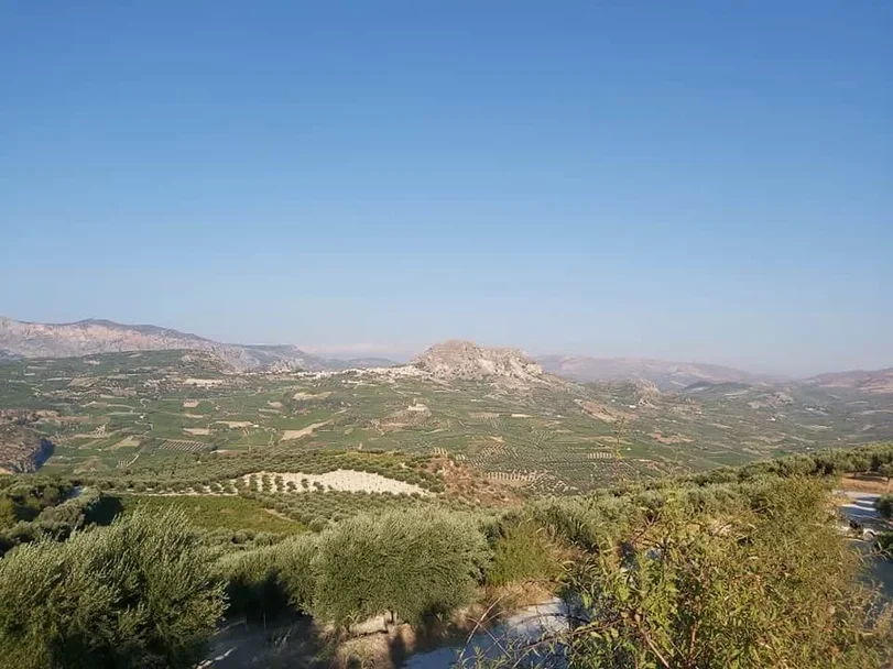 The vineyards of Family Winery Vorizanaki
