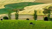 La carne grass fed in America e in Italia