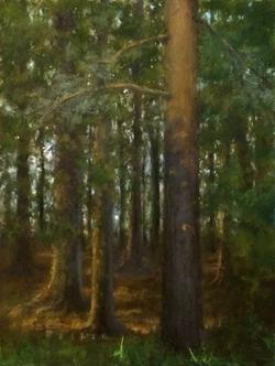 Pine and Cedar