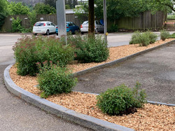 Gartenpflege 2.jpeg