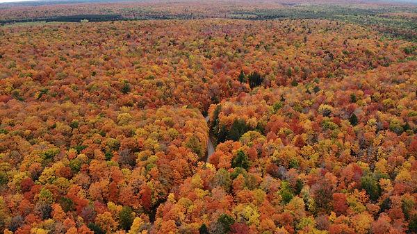 Fall aerial 1.jpg