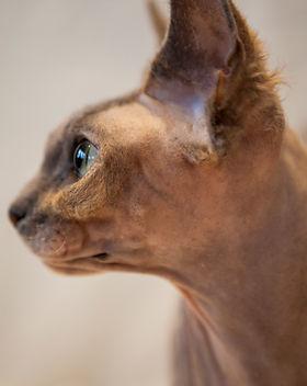 Toves katter-060.jpg