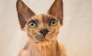 Toves katter-123.jpg