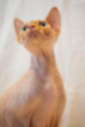 Toves katter-086.jpg