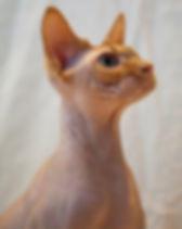 Toves katter-087.jpg