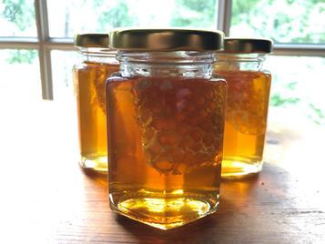 4 Oz Honey Jars with Comb
