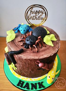 Kids Celebration Cakes