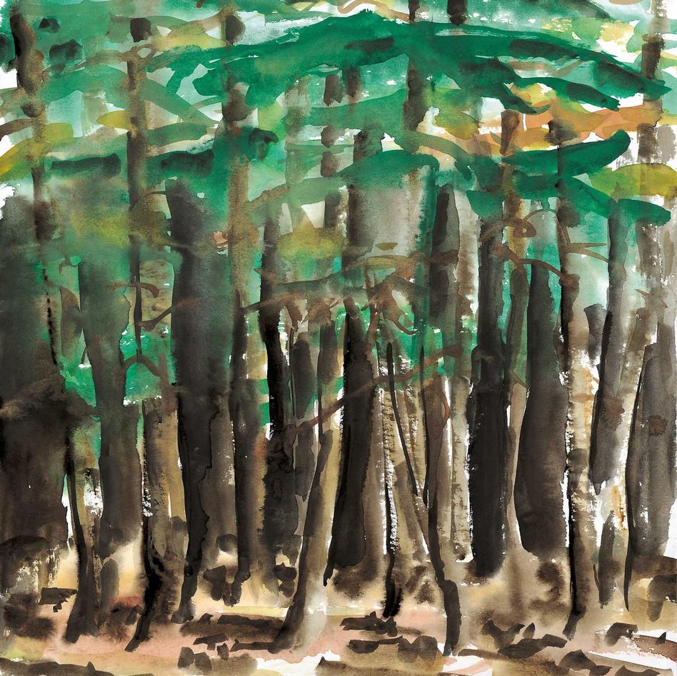 Forêt dense