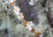Aphrodite-APH01-APH05.jpg