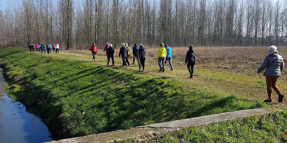 Nordic Walking Challenge