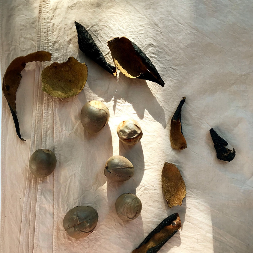 Natural Dyeing with Avocado Pits