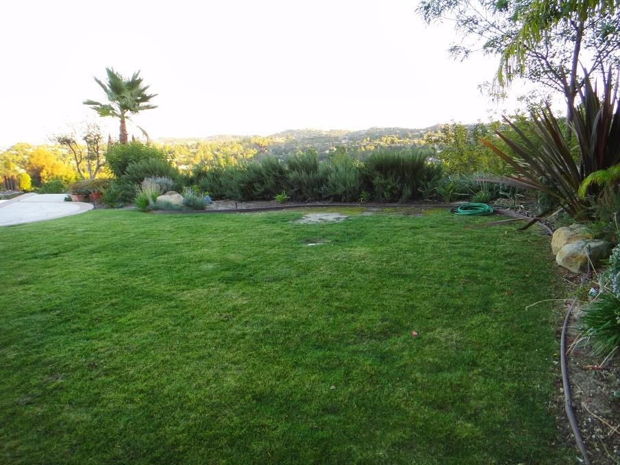 House 3 back yard
