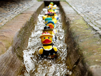 Are your Ducks in a Row for Tax Season?