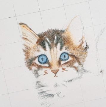 Kitten drawing.jpg
