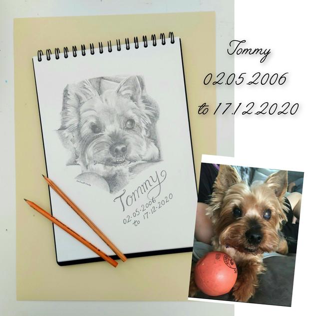 Dog graphite drawing.jpg