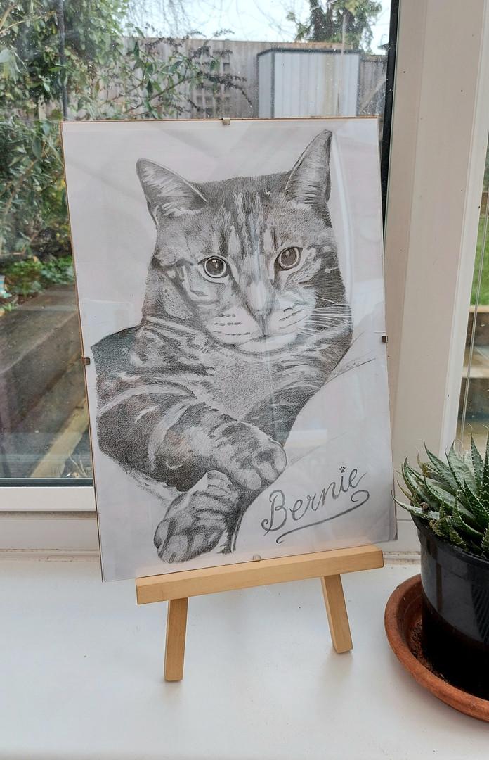 Cat graphite drawing.jpg