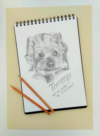 Dog graphite.jpg