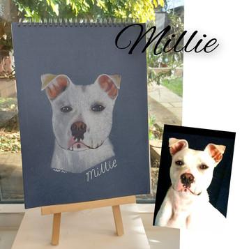 Dog colour pencil.jpg