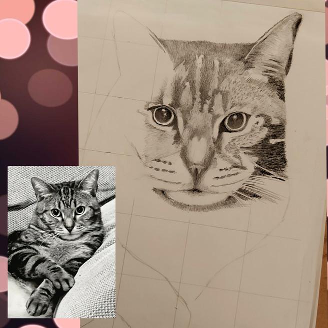 Cat progress.jpg