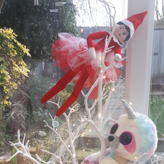 Elf on the shelf in the tree