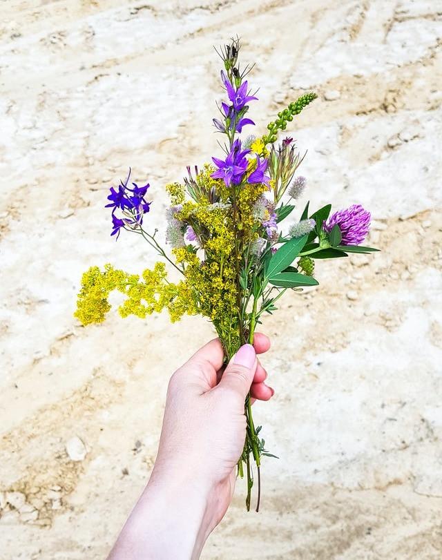 Bukett av vilda blommor