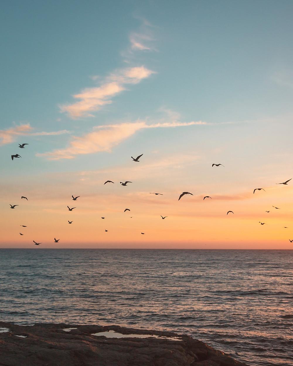 Fåglar som flyger över havet i solnedgång