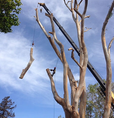 Tree Pruning Arbortech Hayward