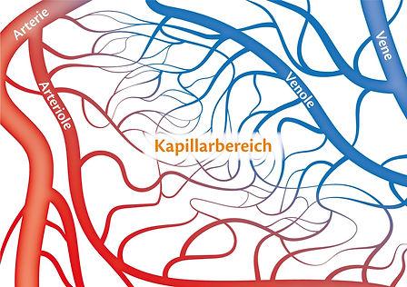 Kapillarbereich_quer.jpg
