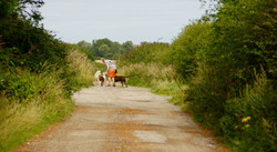 10d Carr Lane Dog walker