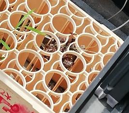 VS アシナガバチ