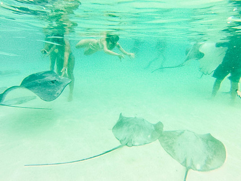 Moorea's Marine Life
