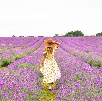 Mayfield Lavender Farm, a lil' piece of France in England
