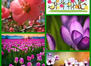 Spring Rejuvenation