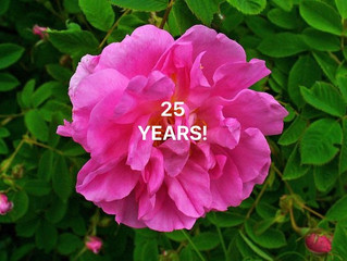 Using Aromatherapy for 25 Years!