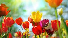 Spring Healing